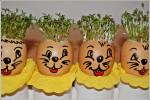 Rzeżucha w skorupkach jajka-Zajączki