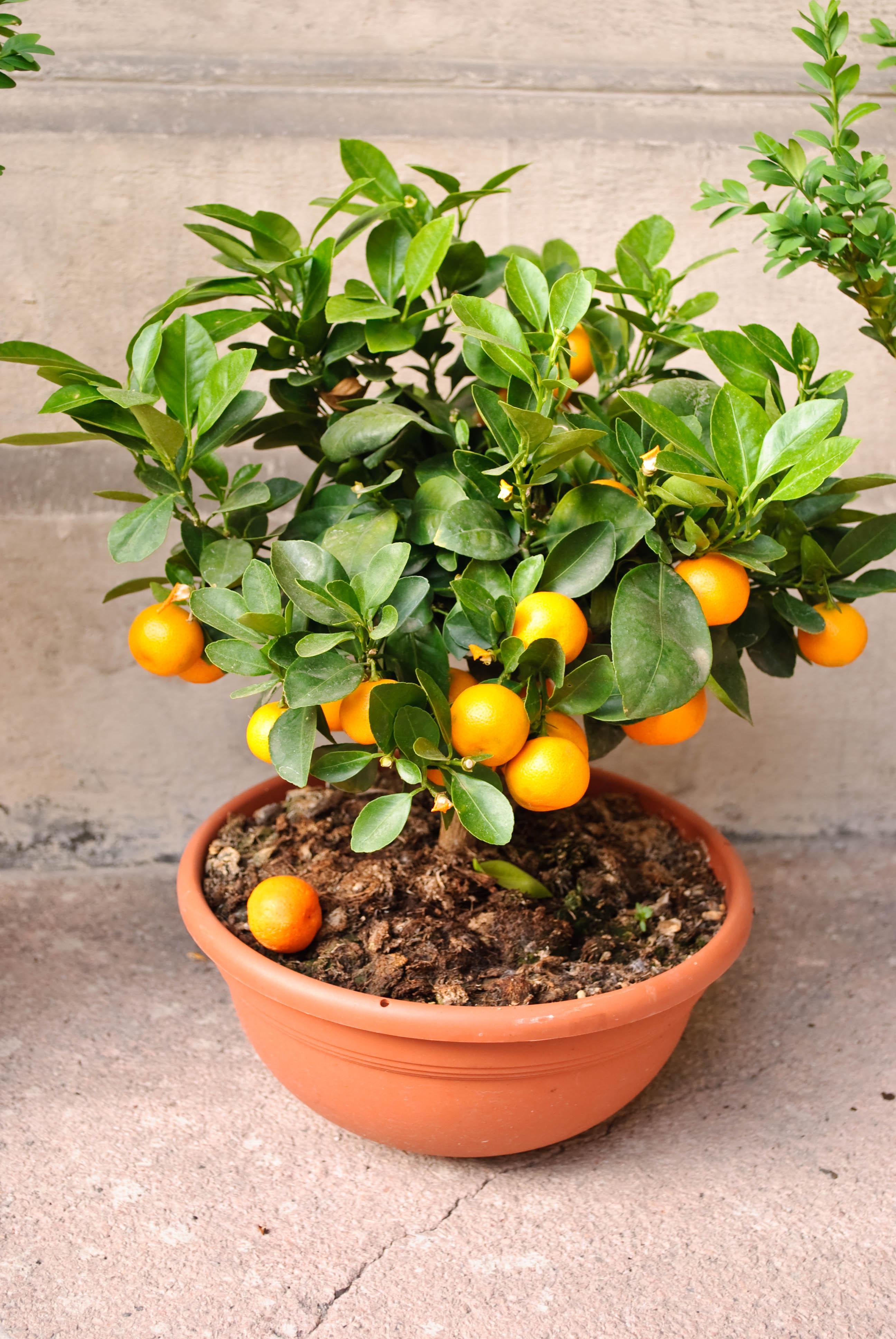 Owoce I Warzywa W Doniczkach Przyslijprzepispl